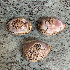 Other - Set of 3 decorative tiger cowrie carved seashells